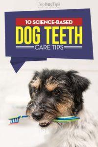 10 Consigli per la cura dei denti per cani basati sulla scienza