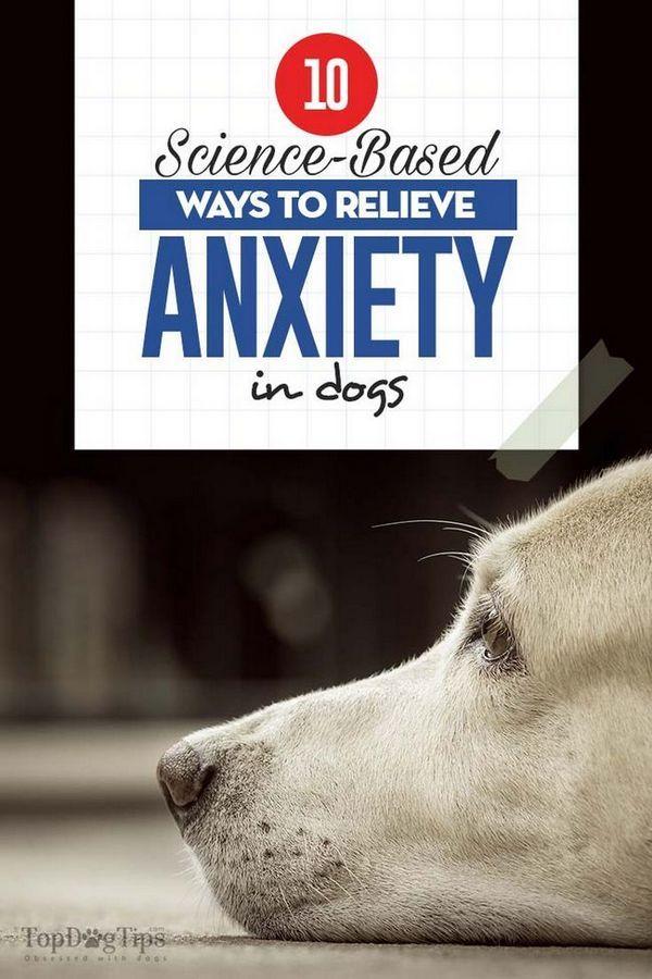 10 Modi basati sulla scienza per alleviare l`ansia nei cani