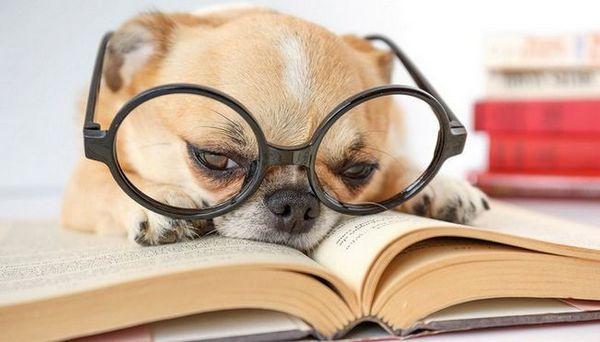 10 Libri unici sui cani che tutti i proprietari di cani devono leggere