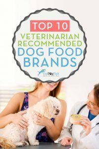 10 Marchi veterinari raccomandati per l`alimentazione dei cani che sono economici