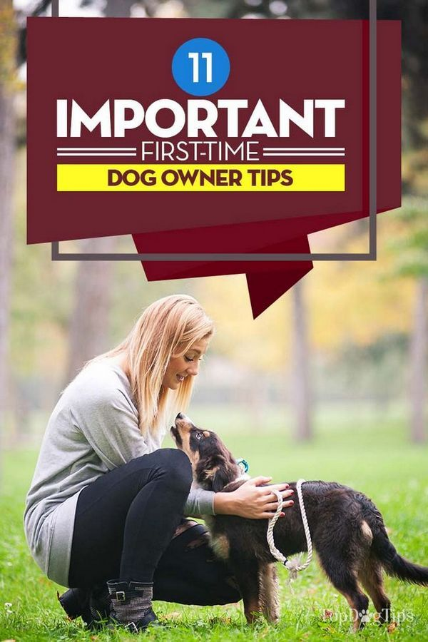 11 Consigli importanti per i proprietari di cani per la prima volta per i futuri utenti