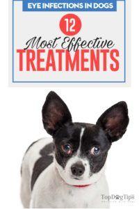 12 Trattamenti e prevenzione delle infezioni agli occhi dei cani