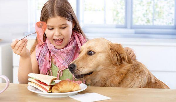 Bigstock-Little-girl-e-pet-dog-avere-33837710