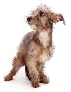 12 Segni il tuo cane è stressato