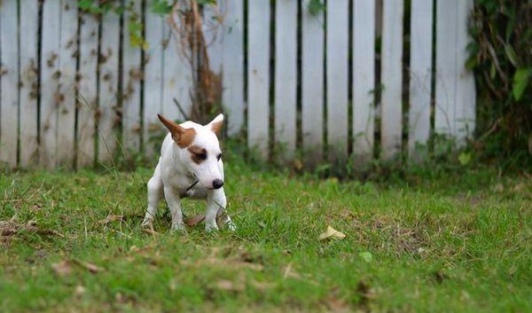 13 Modi basati sulla scienza per affrontare i vermi nei cani