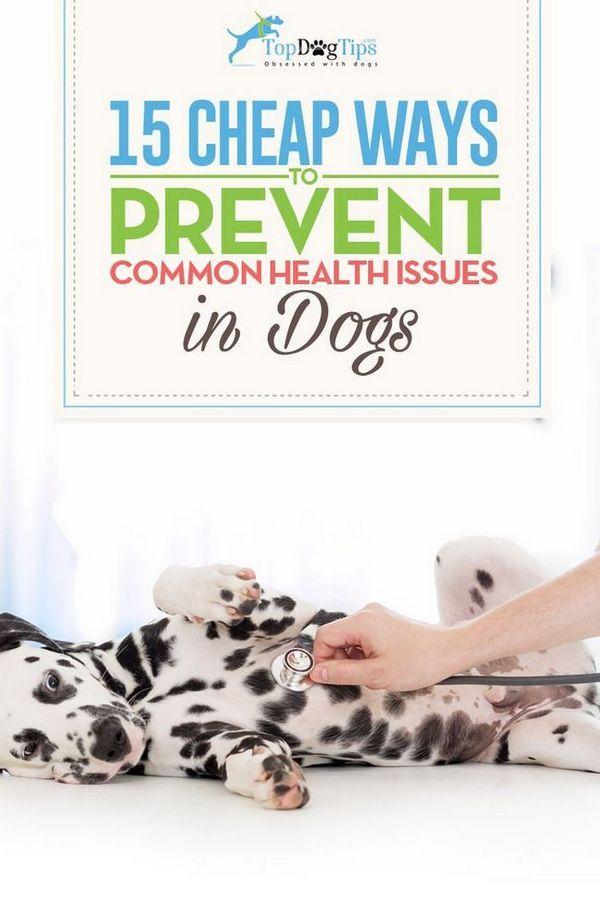15 Modi economici per prevenire problemi di salute comuni nei cani