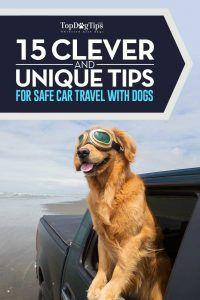 15 Consigli di sicurezza per viaggiare con i cani in auto