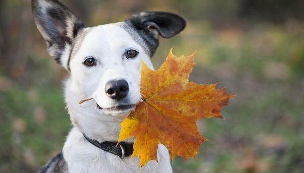 15 Modi per mantenere il tuo cane sano in autunno
