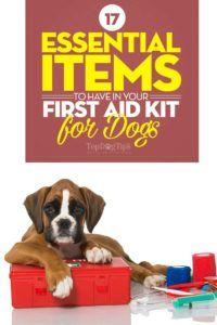 17 Articoli essenziali da avere nel kit di pronto soccorso per cani