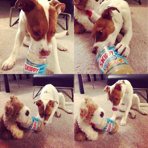 22 Foto che dimostrano che i cani sono più intelligenti di quanto pensi