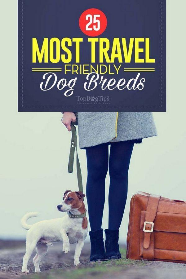 25 Razze di cani più amichevoli per i viaggi