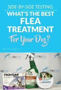 Il miglior trattamento per pulci e zecche per cani