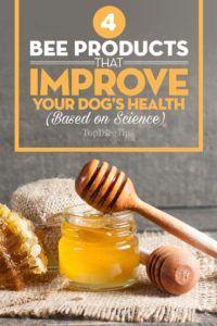 4 Prodotti di api che possono migliorare la salute del tuo cane (basato sulla scienza)