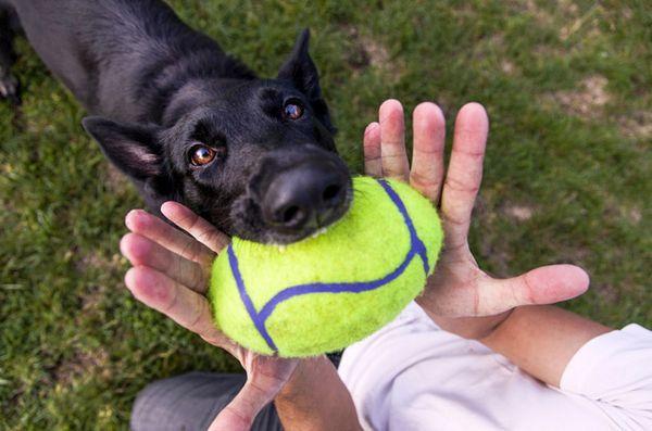 5 Modi semplici per perdere peso con il vostro cane