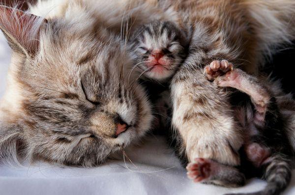5 Suggerimenti su una corretta alimentazione per il tuo gatto in gravidanza