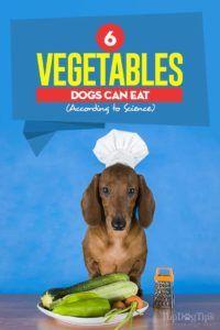 I 6 cani da verdura possono mangiare secondo la scienza