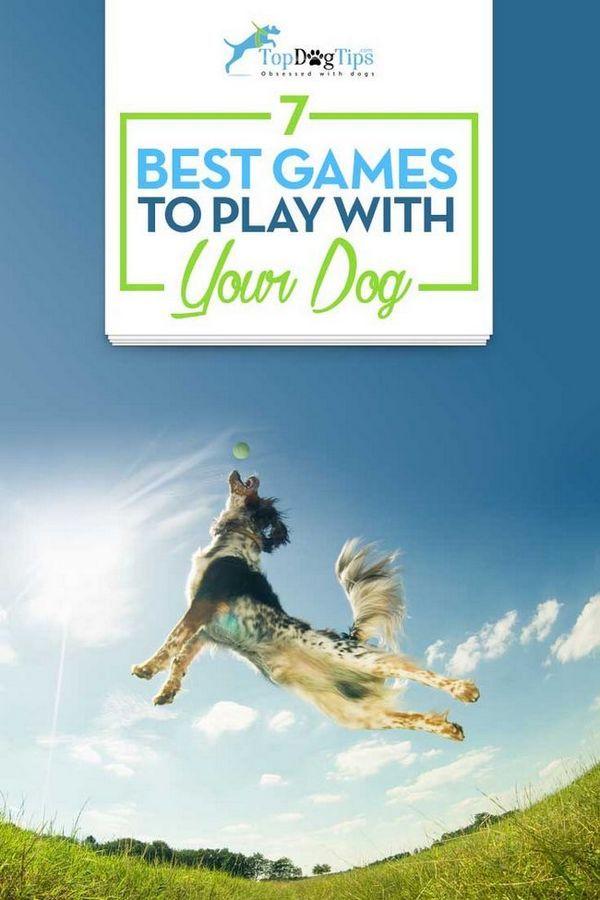 I migliori giochi per giocare con i cani