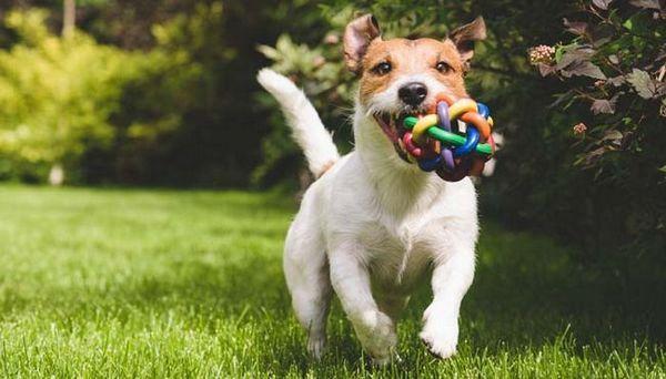 I migliori giochi da giocare con il tuo cane