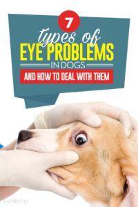 7 Problemi agli occhi nei cani e come affrontarli