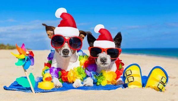 7 Idee su come trascorrere il Natale con il tuo cane