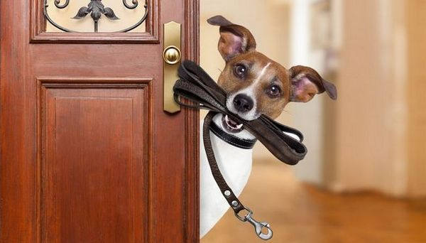 I 7 migliori consigli su come diventare un cane di successo