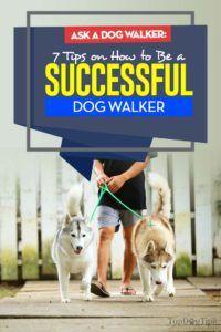 I 7 consigli su come essere un cane di successo