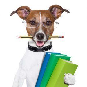 7 Tipi di pavimentazione per la sicurezza e la salute del vostro cane