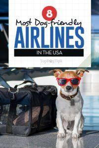 8 Compagnie aeree a misura di cane