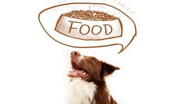 9 Metodi razionali per valutare il cibo per cani sano
