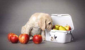 9 Superfoods per cani che migliorano la loro salute (secondo la scienza)