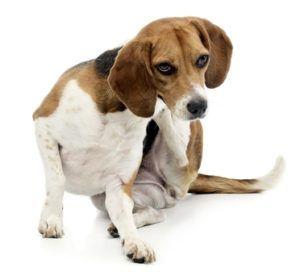 Medie allergiche per cani