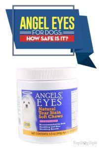 Recensione di Angel eyes for dogs: è sicuro per gli animali domestici?
