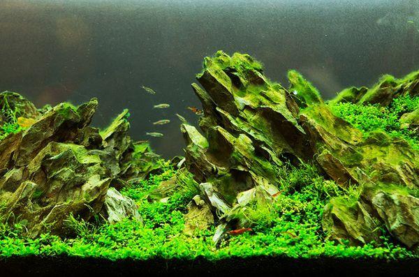Aquascaping: un serbatoio di bellezza