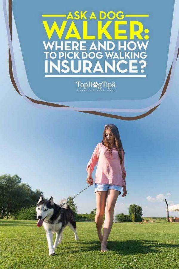 Dove e come scegliere l`assicurazione per il cane
