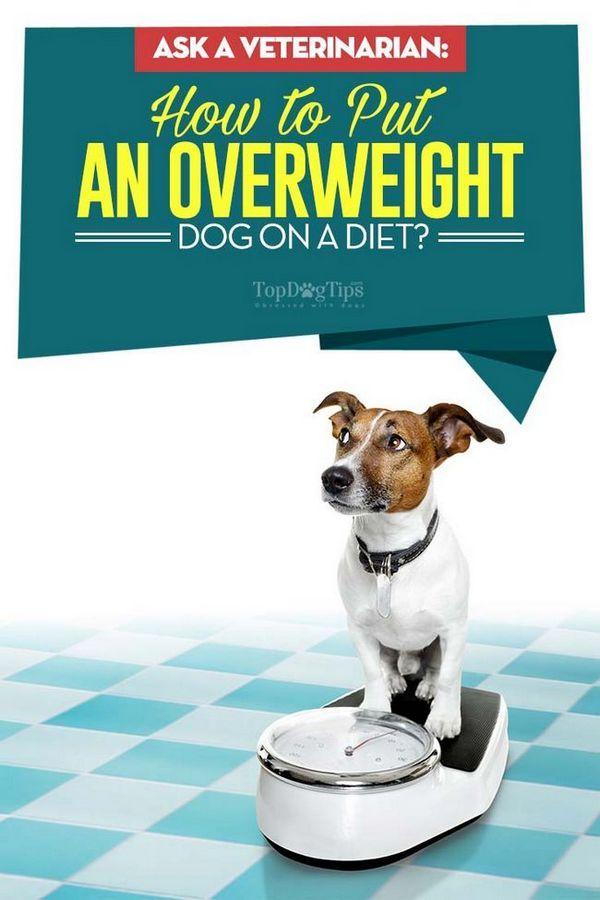 Chiedi a un veterinario: come mettere un cane in sovrappeso a dieta?