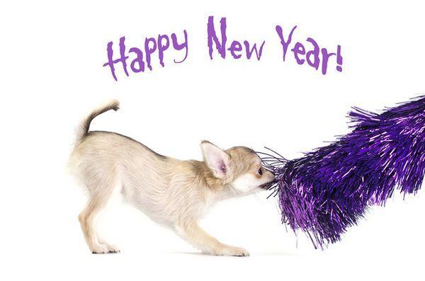 Chiedi ai pelosi padrini: le risoluzioni del 2016 per il nuovo anno