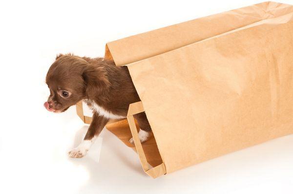 Chiedete ai pelosi dogfather: rompicapo di doggy bag?