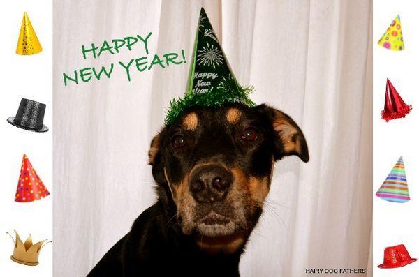 Chiedi ai dogfather pelosi: le risoluzioni del nuovo anno