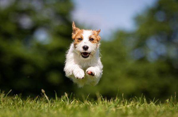 Chiedi ai pelosi padrini: cane scatenato una minaccia di quartiere