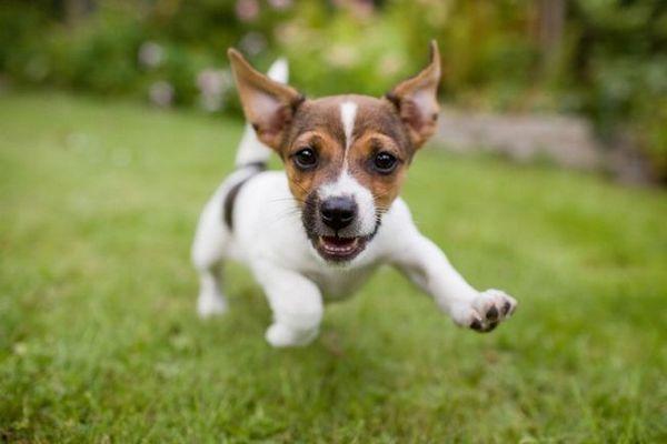 Chiedi ai dogfather pelosi: perché ha fatto acquisti, invece di adottarli?