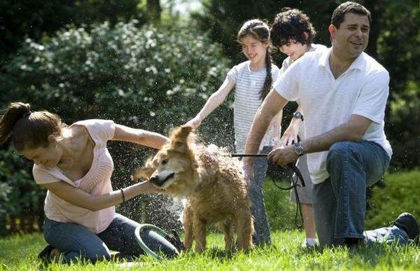 I batteri dei cani possono essere utili per la salute umana