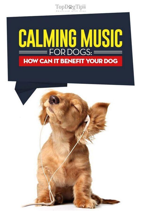 Musica rilassante per cani - cos`è e come può essere utile al tuo cane
