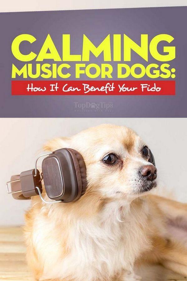 Musica rilassante per cani - Che cos`è e in che modo può avvantaggiare il tuo cane