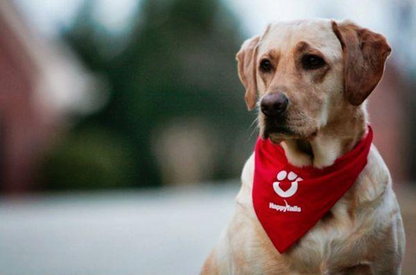 I cani da terapia possono ridurre i farmaci per i bambini pre-op?