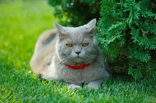 Salute del gatto: cos`è la toxoplasmosi?
