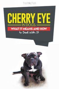 Ciliegia nei cani: cosa significa e come affrontarli