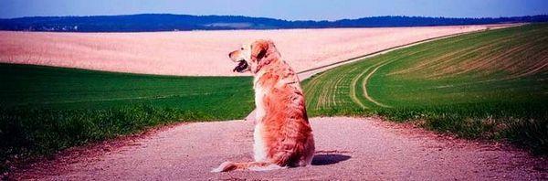 Pastelli per cani: la necessità e il beneficio dell`applicazione