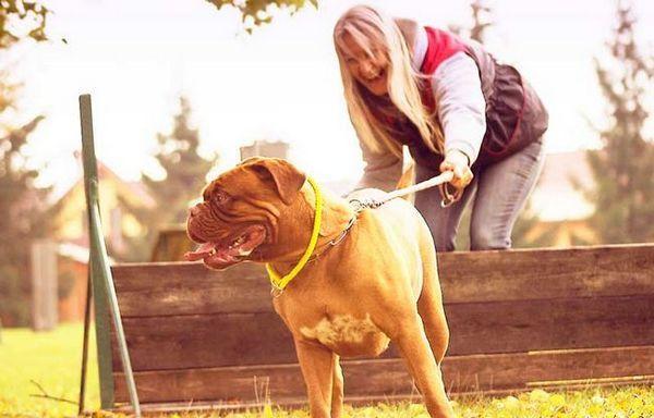 Pastelli per cani