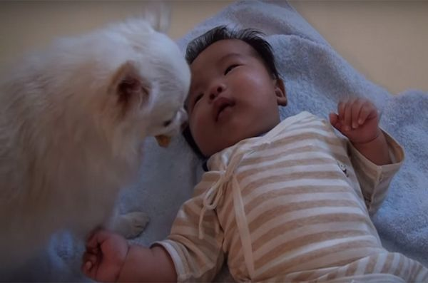 Il pianto del bambino ha offerto una sorpresa dal cane interessato [video]