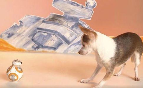 Offerte del Cyber Friday relative ai fan dei cani